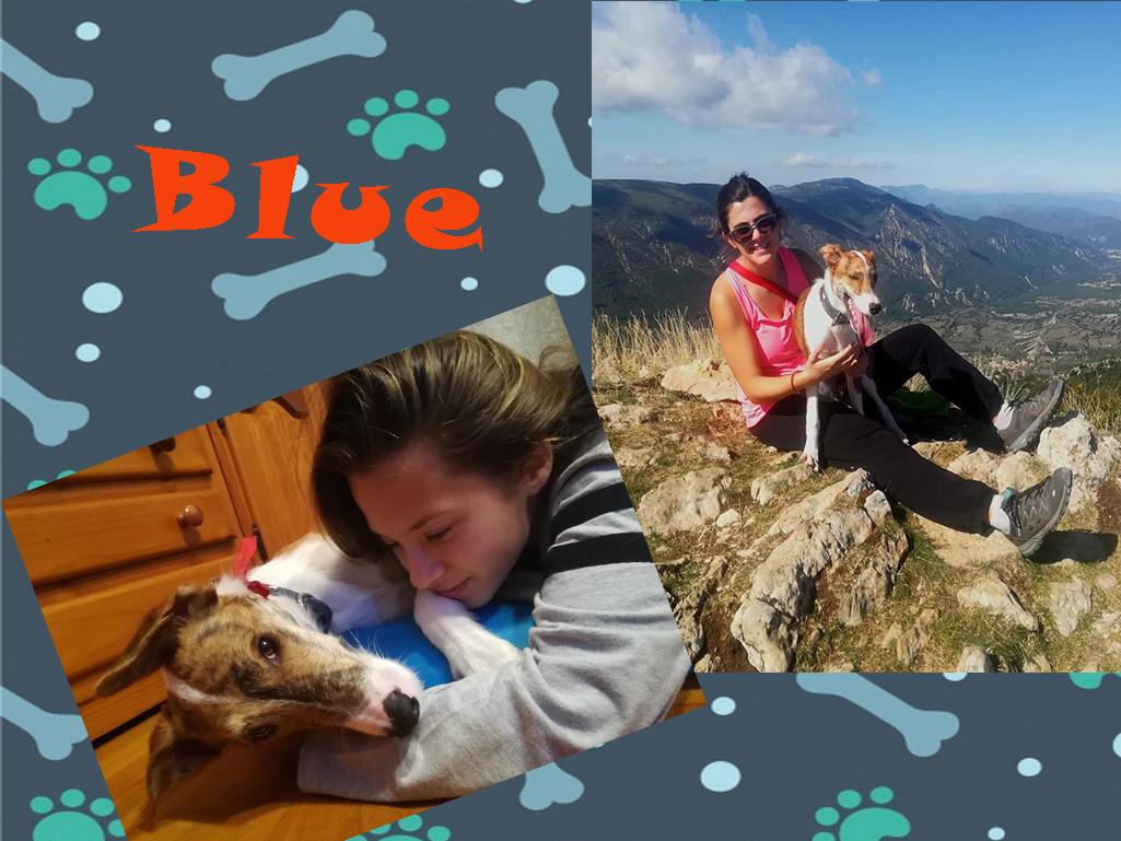 ¡Blue adoptado!