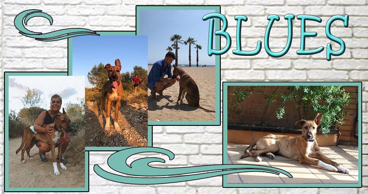 ¡Blues, antes Brody, adoptado!