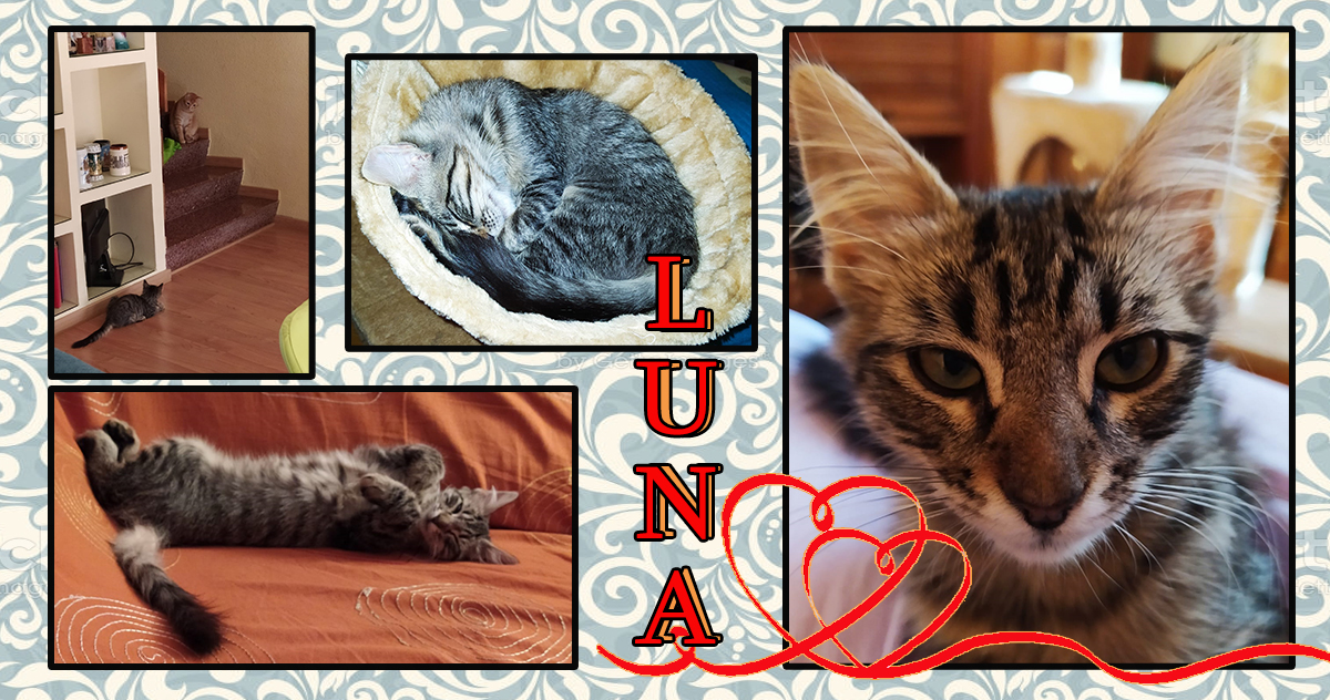 ¡Luna adoptada!
