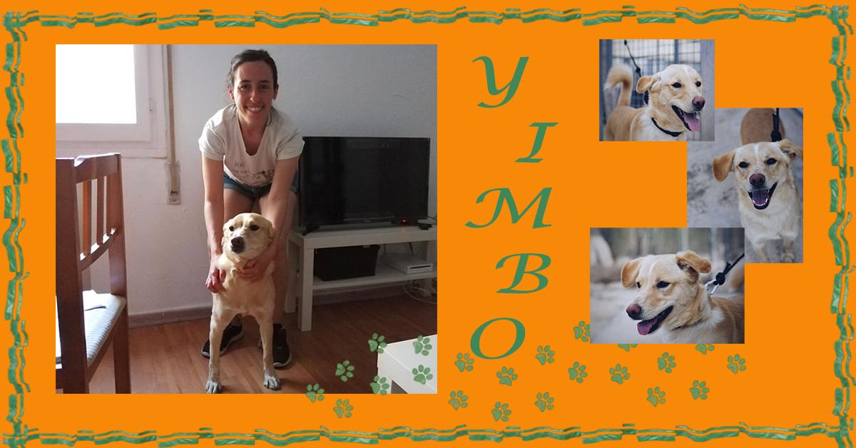 ¡Yimbo adoptado!