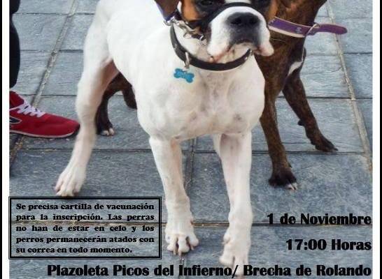 I Desfile Canino Arcosur