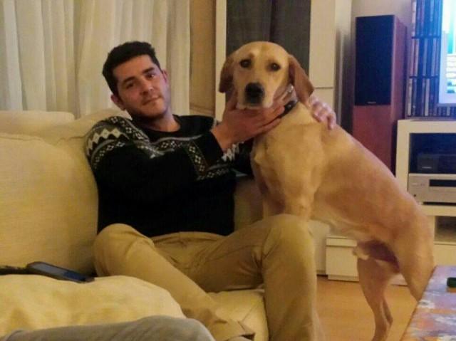 ¡Lucho, antes Ámbar, adoptado!