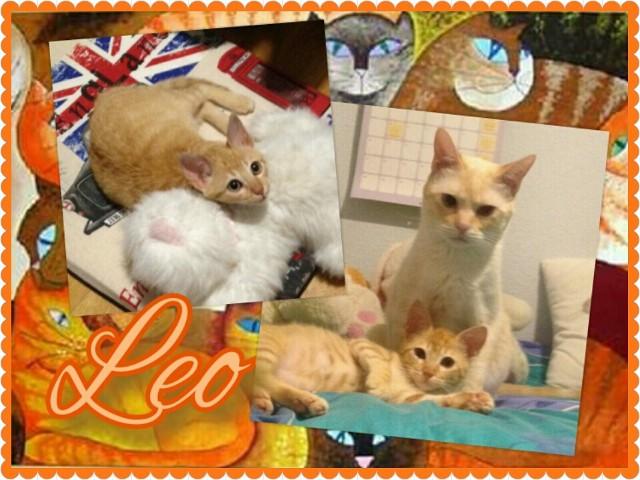 ¡Leo adoptado!