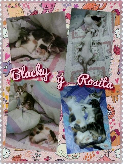 Blacky Rosita