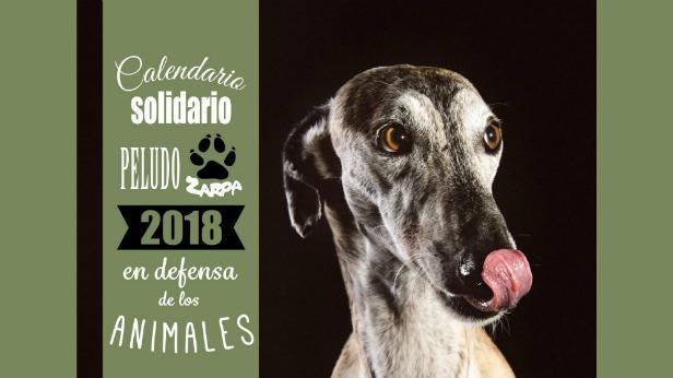 Calendarios Solidarios de Perros y Gatos Zarposos 2018