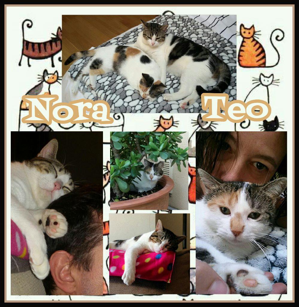 ¡Nora y Teo, antes Nora y Erin, adoptados!