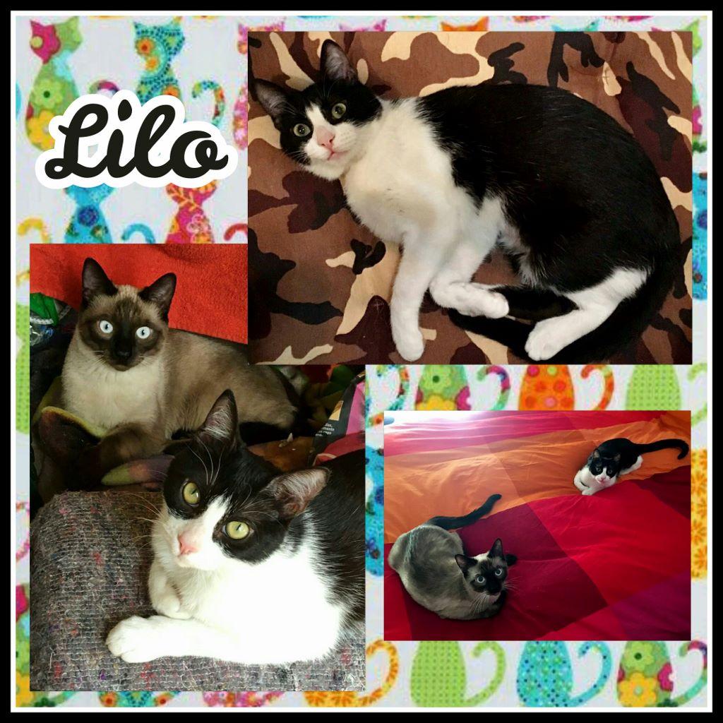 ¡Lilo, antes Nala, adoptada!