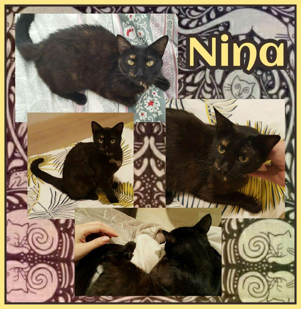 ¡Nina adoptada!