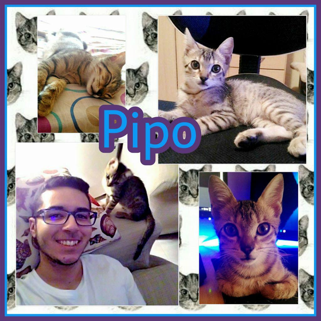 ¡Pipo adoptado!