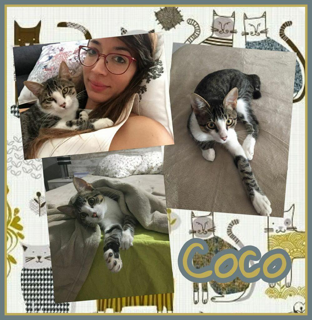 ¡Coco, antes Luigi, adoptado!
