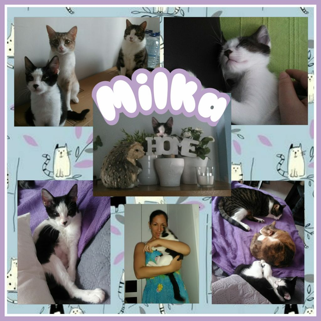¡Milka adoptada!