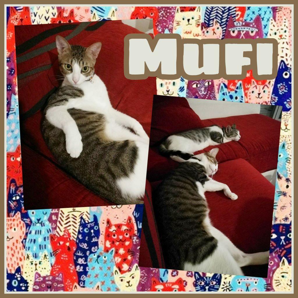 ¡Mufi adoptado!