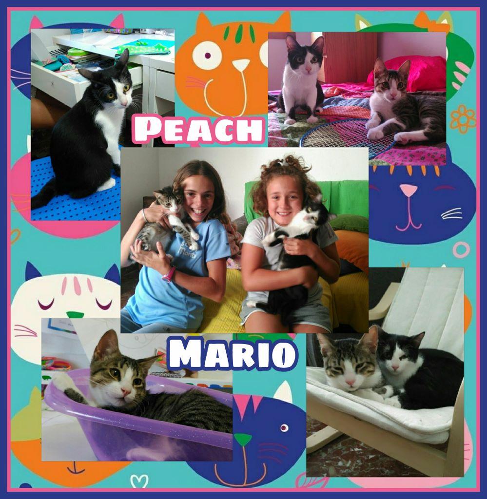 ¡Peach y Mario adoptados!