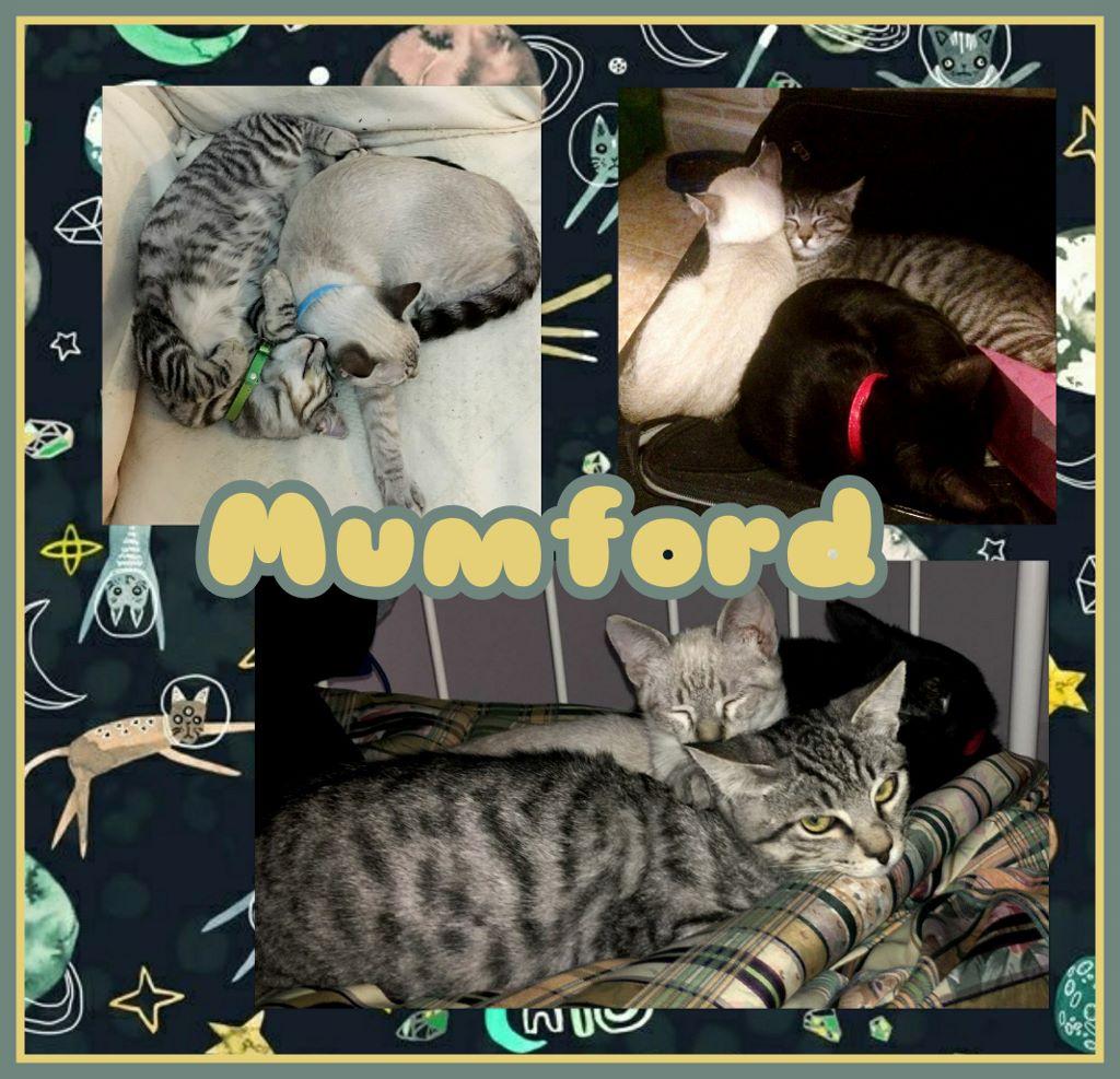¡Mumford, antes Tornillo, adoptado!