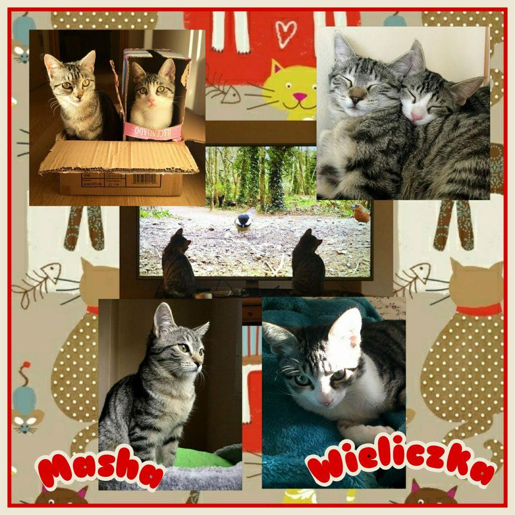 ¡Masha y Wieliczka, antes Misu y Jasa, adoptadas!