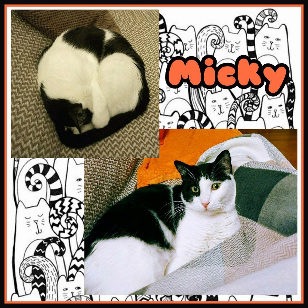¡Micky adoptado!