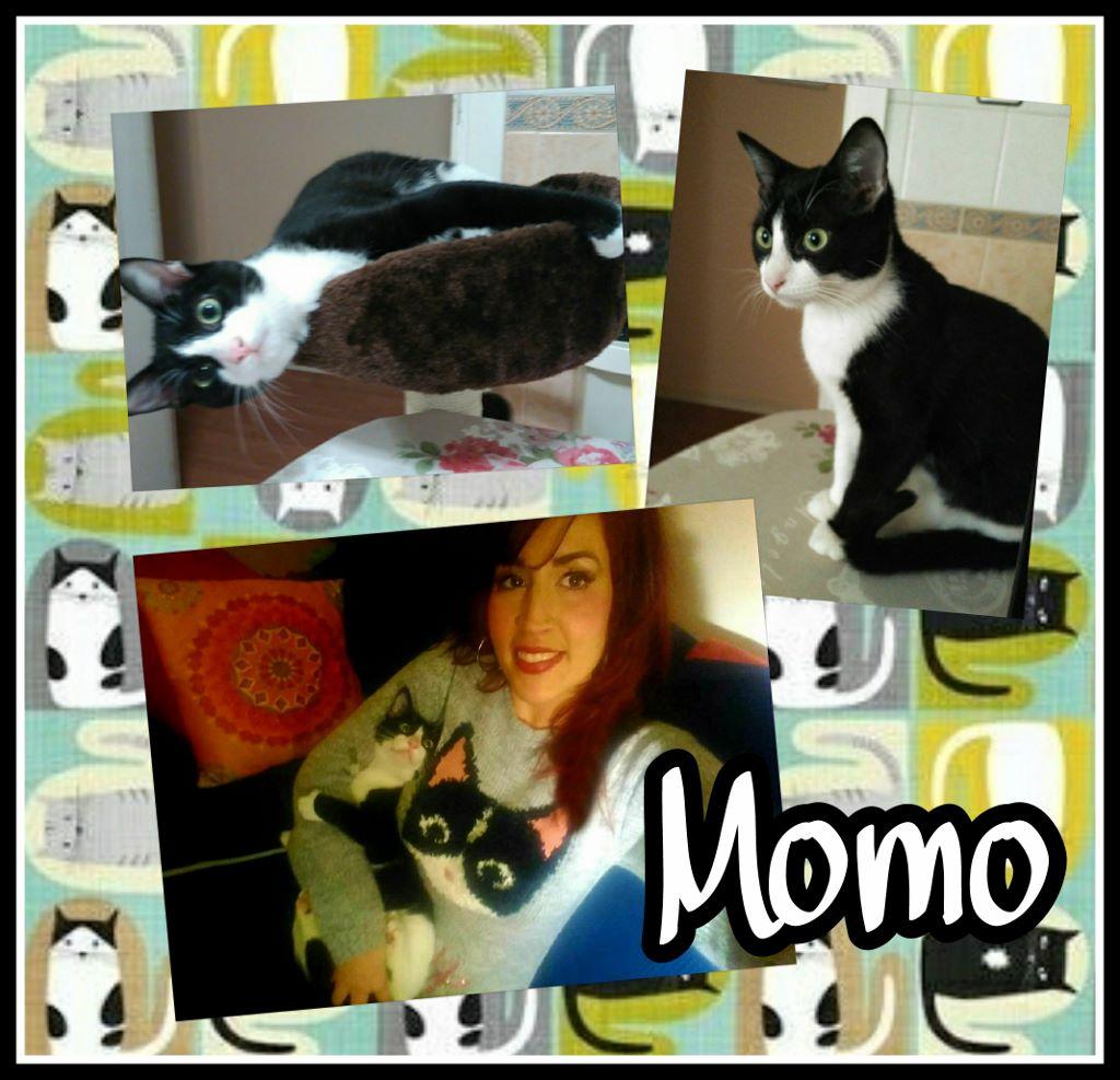 ¡Momo, antes Gizmo, adoptado!