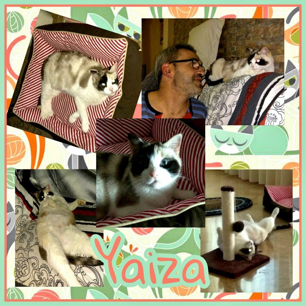 ¡Yaiza, antes Sofía, adoptada!