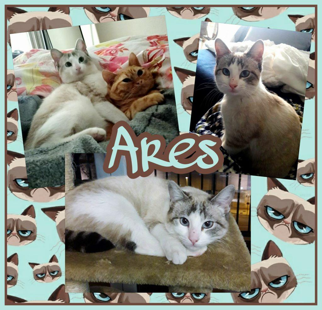 ¡Ares, antes Calimero, adoptado!
