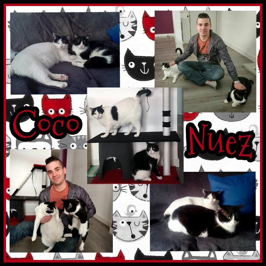 ¡Coco y Nuez adoptados!