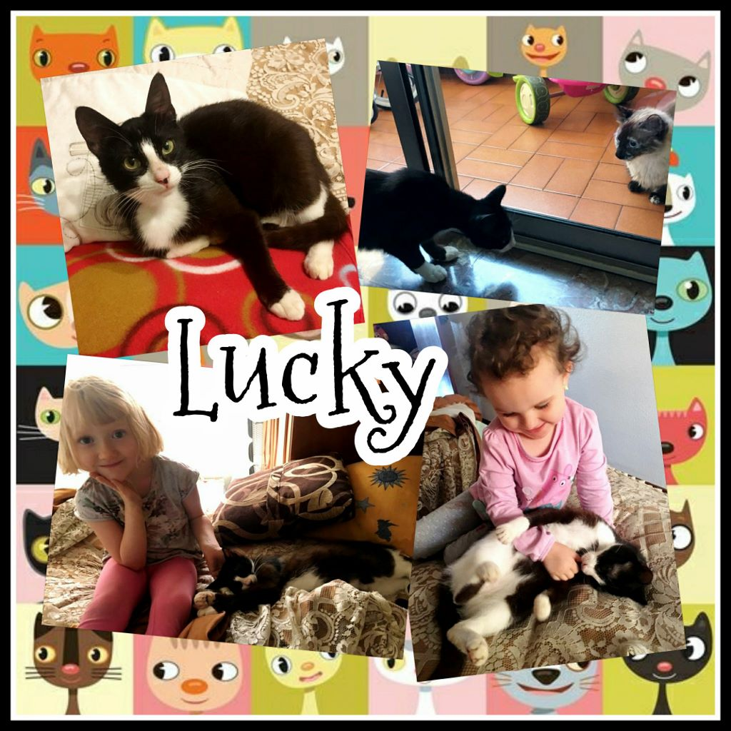 ¡Lucky adoptado!