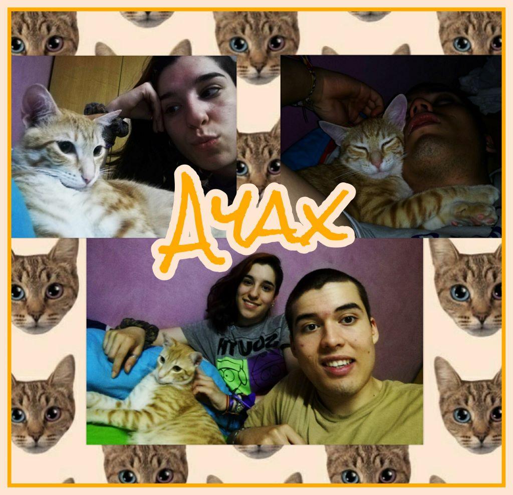 ¡Ayax, antes Jazz, adoptado!