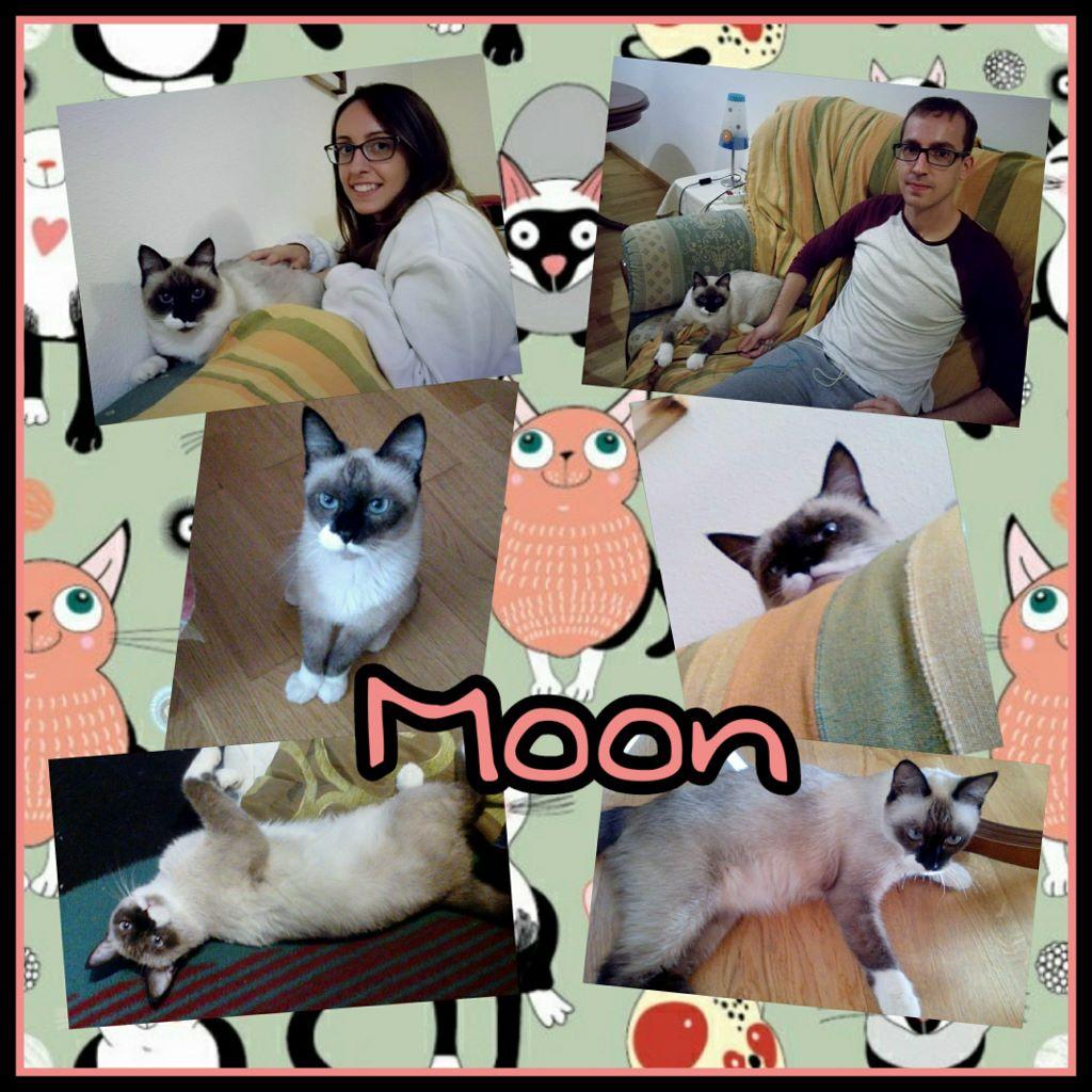 ¡Moon adoptada!