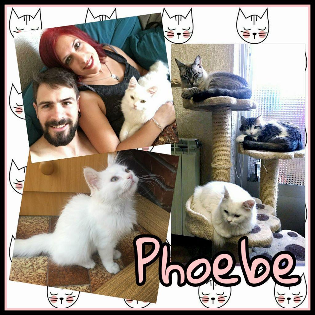 ¡Phoebe, antes Katana, adoptada!