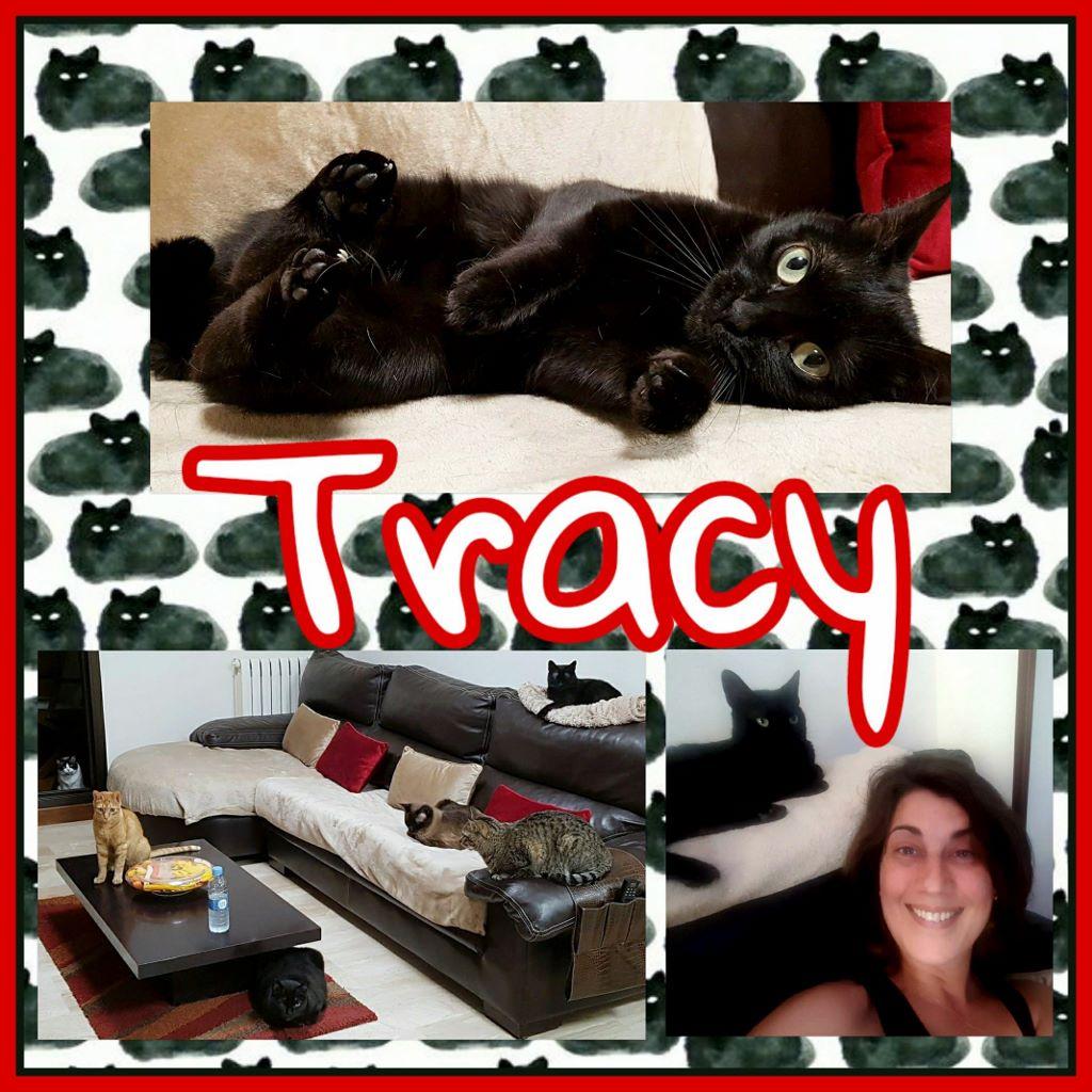 ¡Tracy adoptada!
