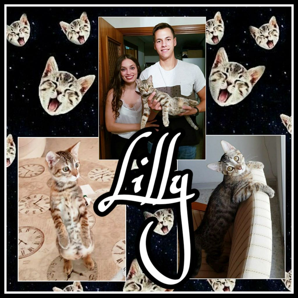 ¡Lilly adoptada!