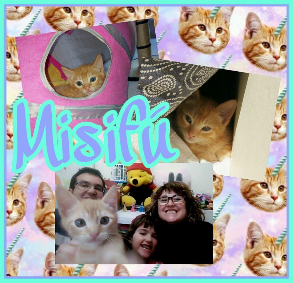 ¡Misifú, antes Pichu, adoptado!