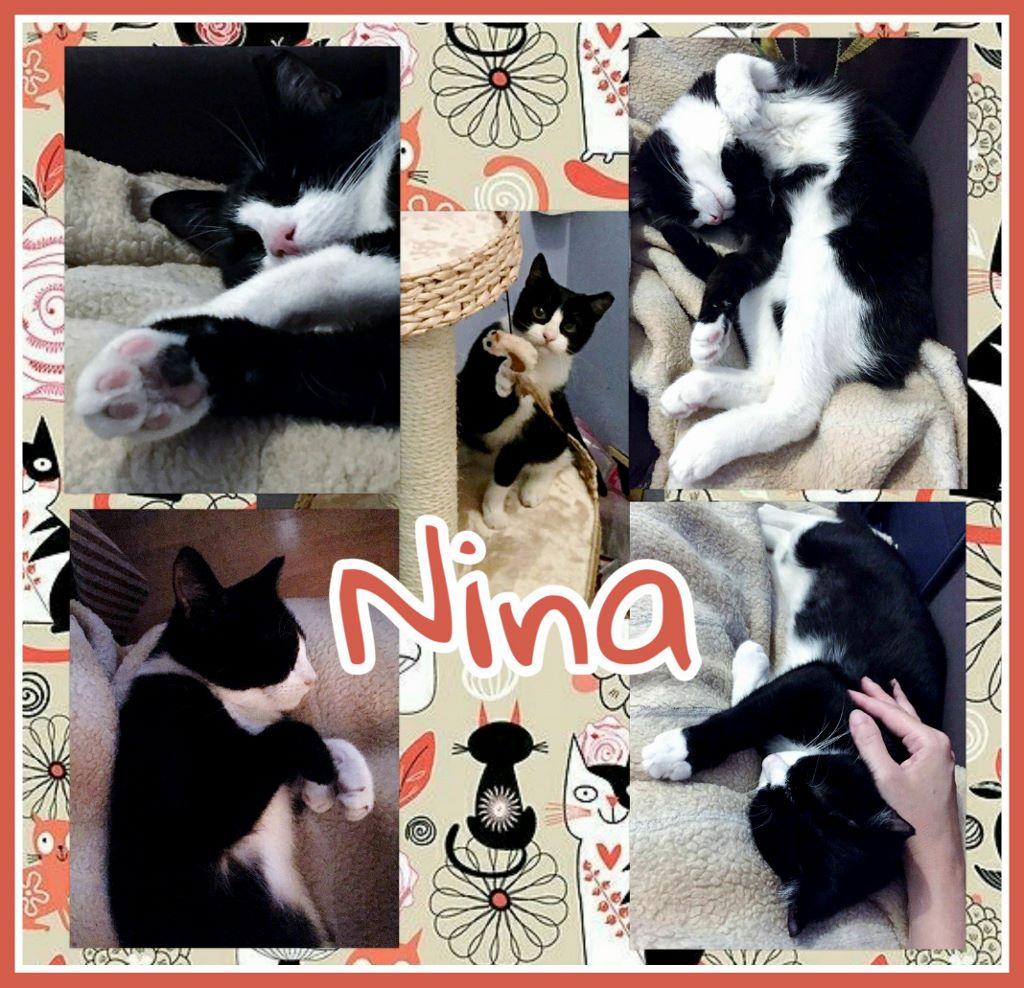 ¡Nina, antes Lúa, adoptada!