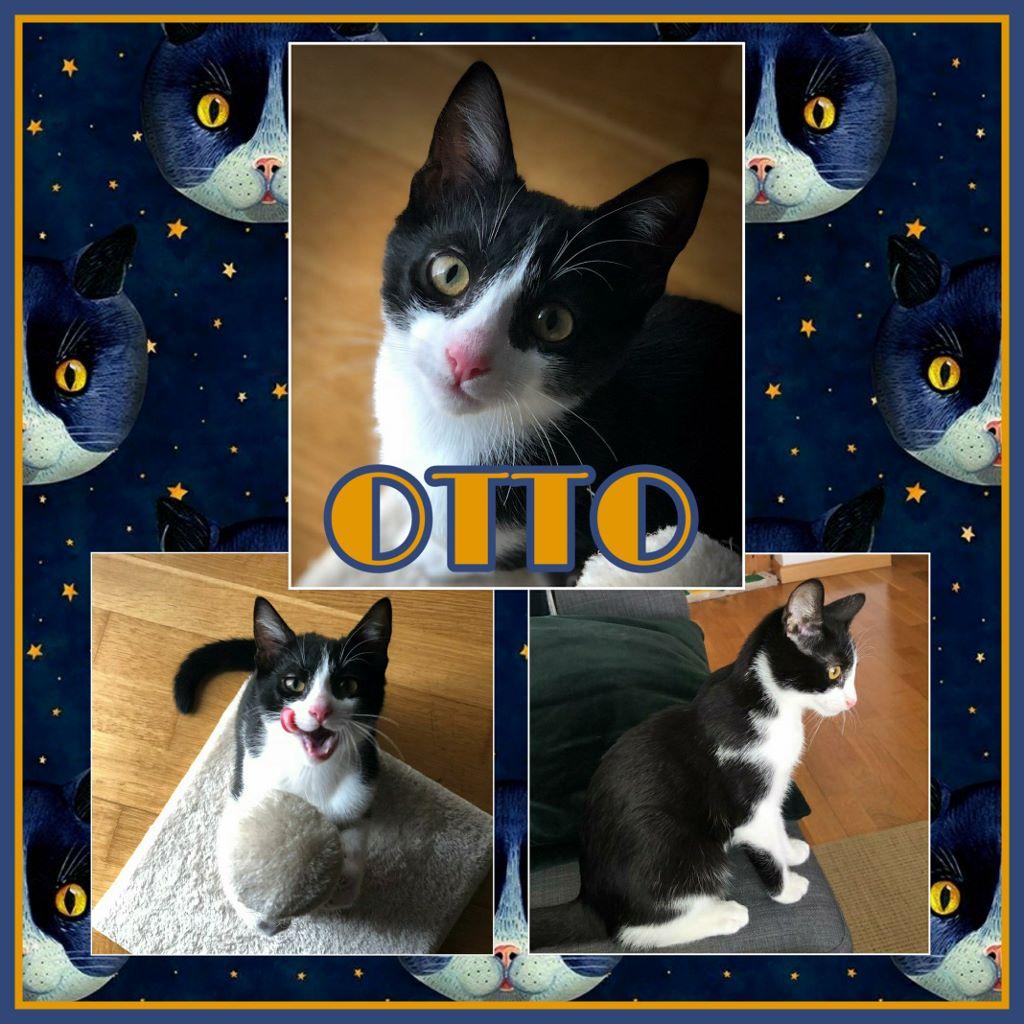 ¡Otto, antes Bubu, adoptado!