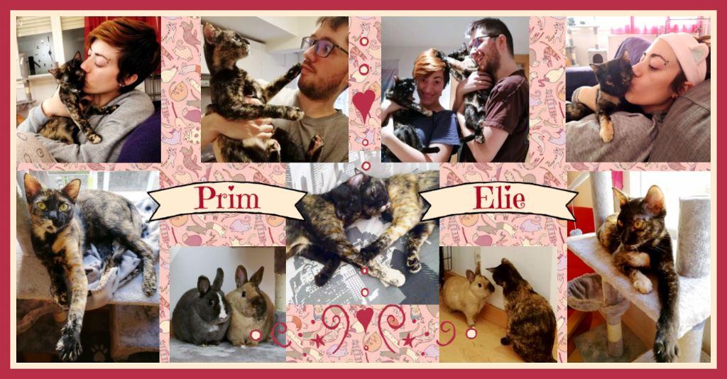 ¡Prim y Elie, antes Prímula y Campanilla, adoptadas!
