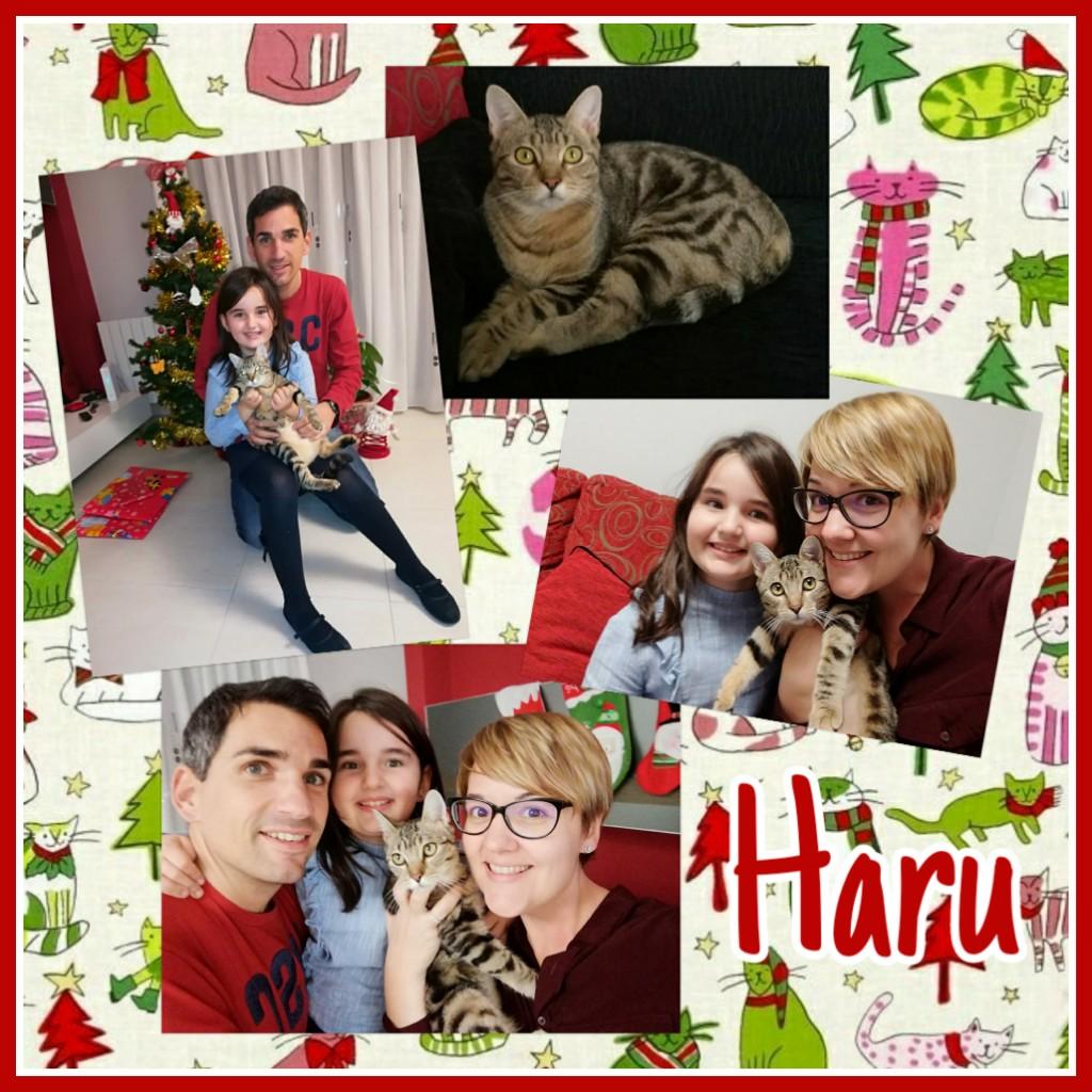 ¡Haru adoptada!