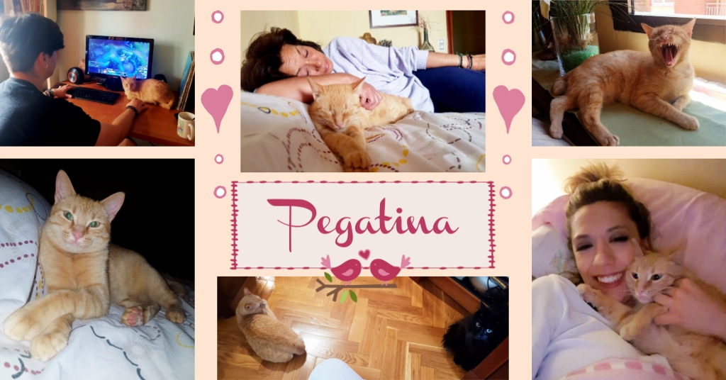 ¡Pegatina, antes Honey, adoptada!