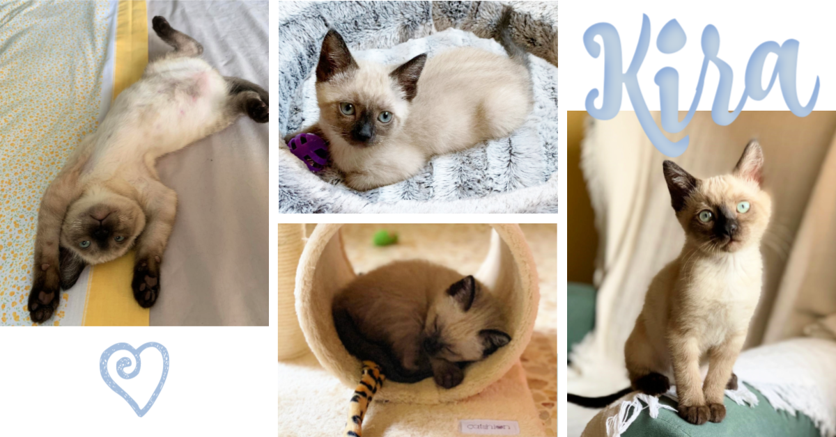 ¡Kira, antes Dori, adoptada!