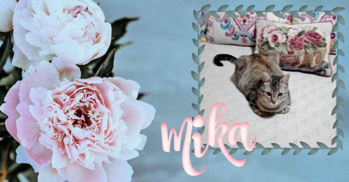 ¡Mika, antes Juanita, adoptada!