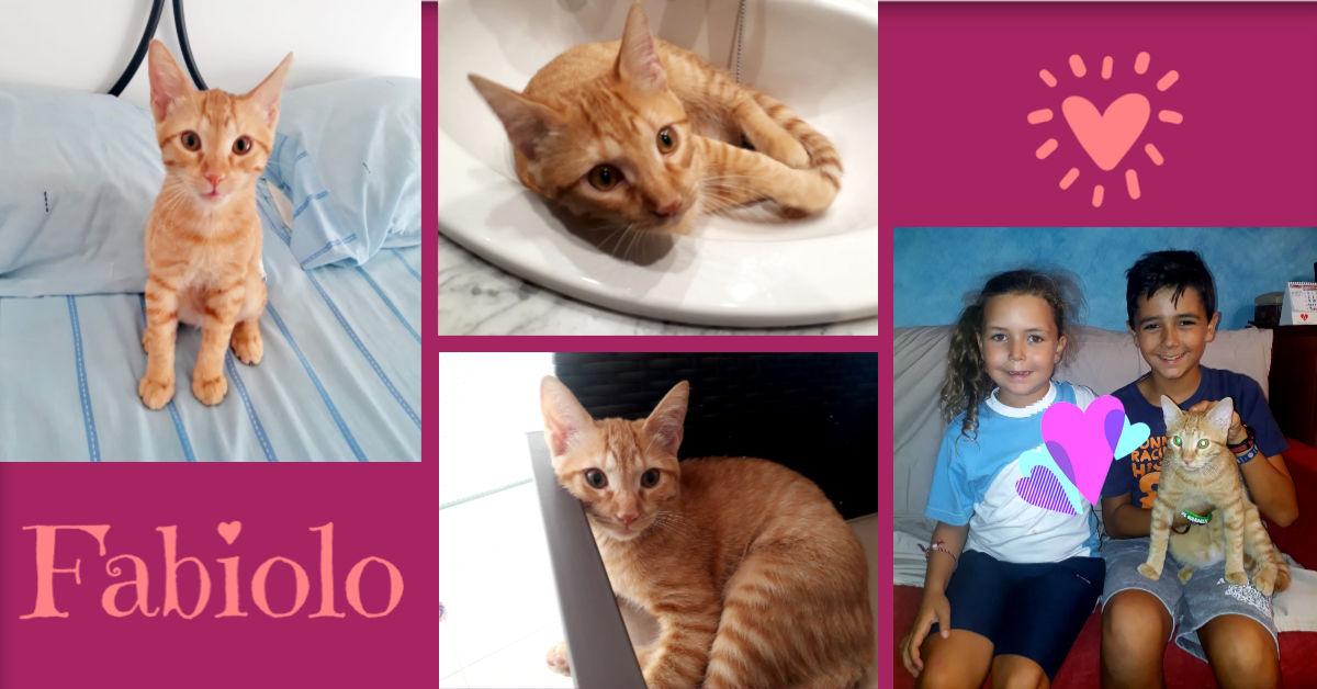 ¡Fabiolo adoptado!