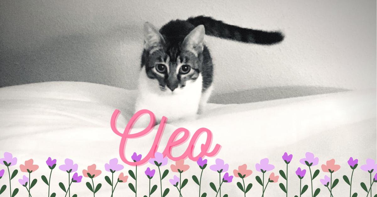¡Cleo, antes Bonnie, adoptada!