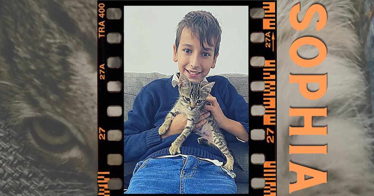 niño sujetando un gato adoptado a rayas sophia