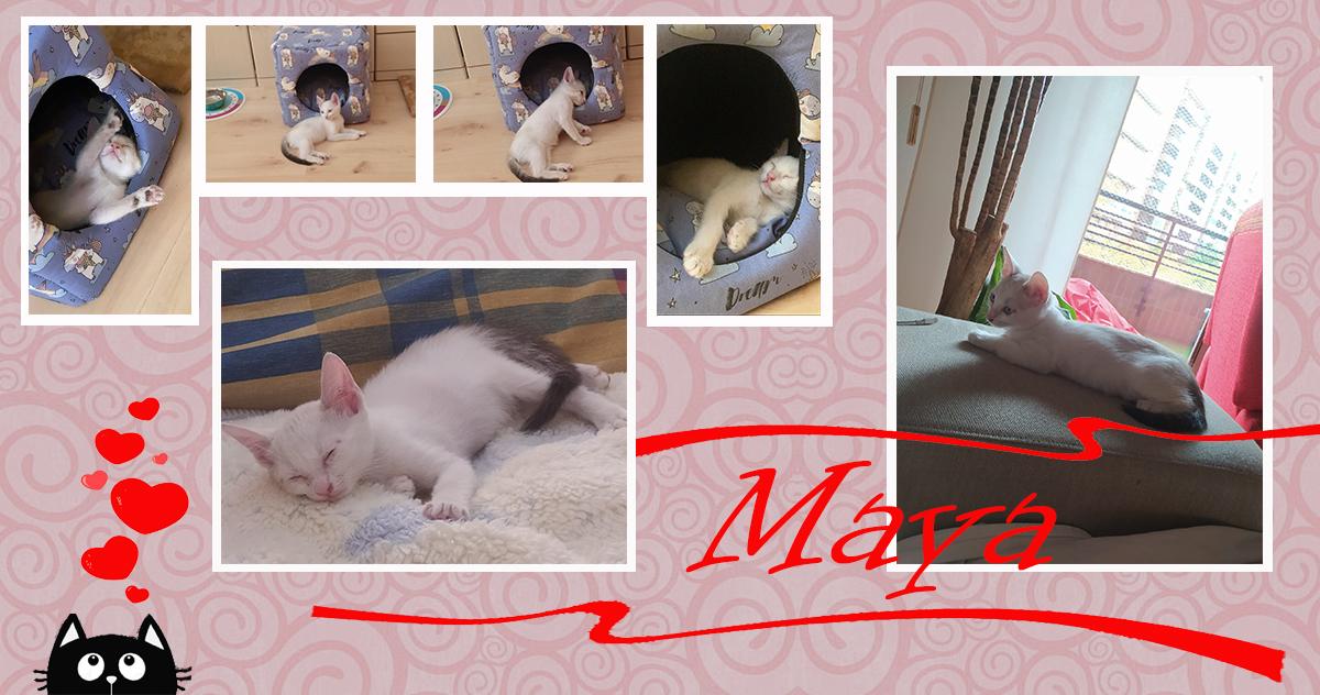 ¡Maya, antes Blu, adoptada!