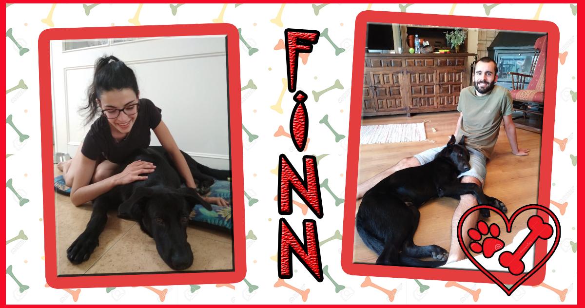 ¡Finn adoptado!