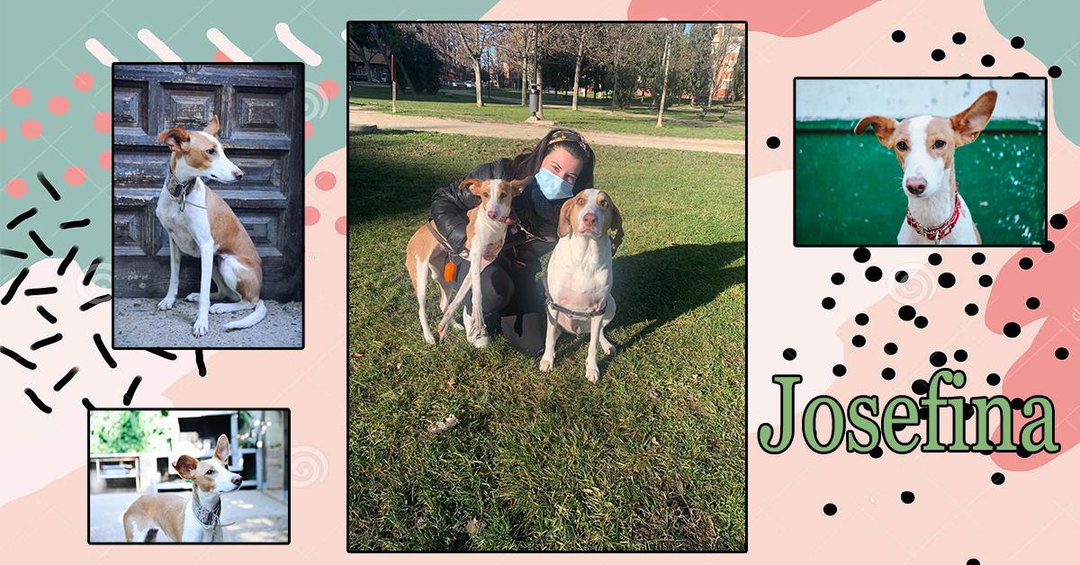 ¡Josefina adoptada!