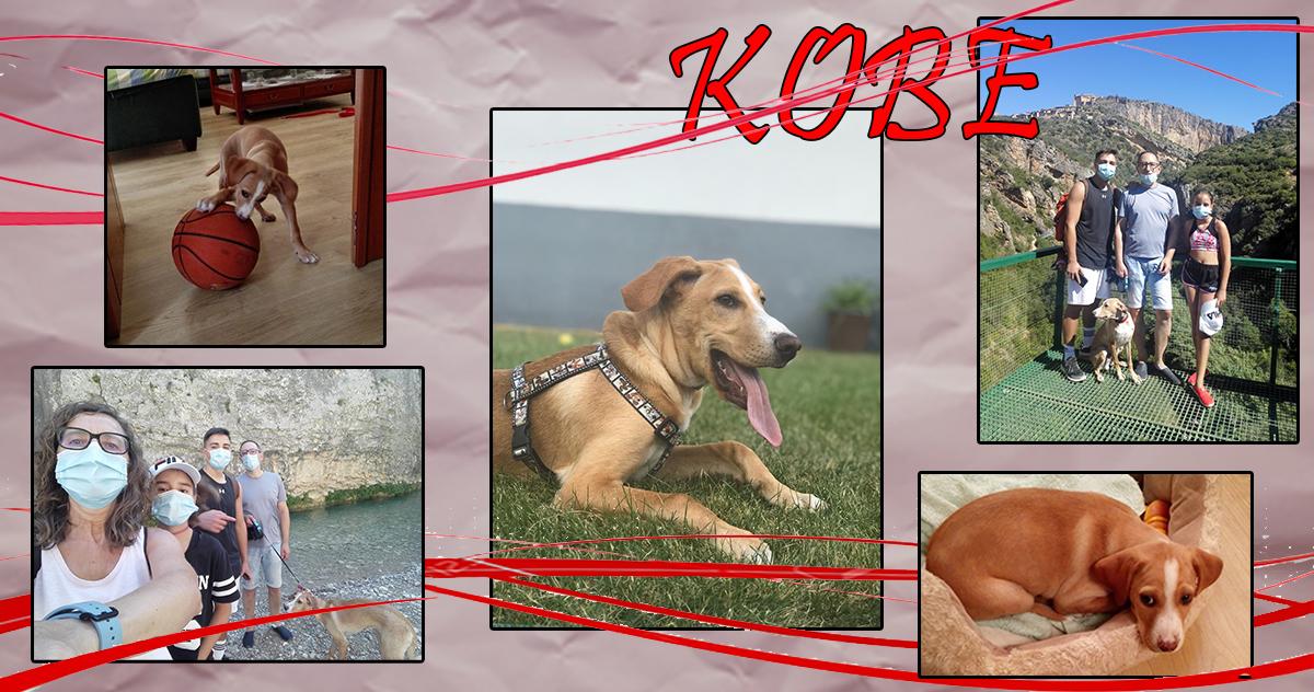 ¡Kobe adoptado!