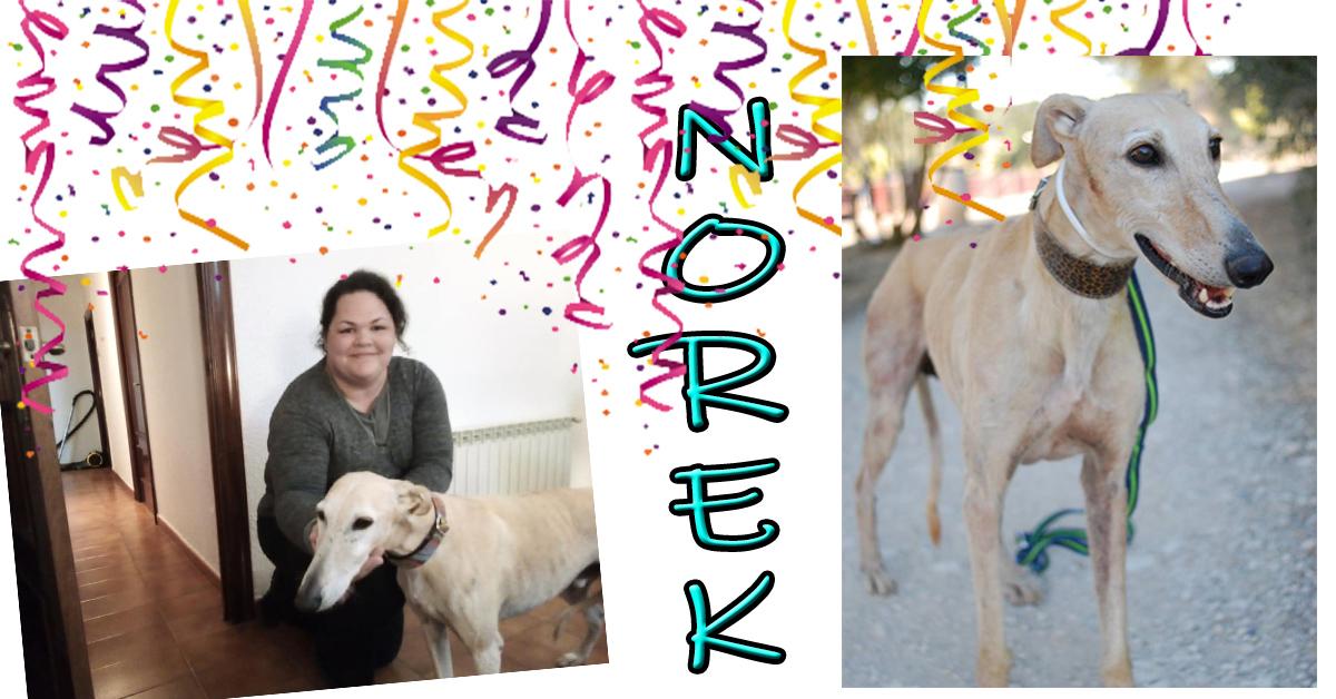 ¡Norek adoptado!