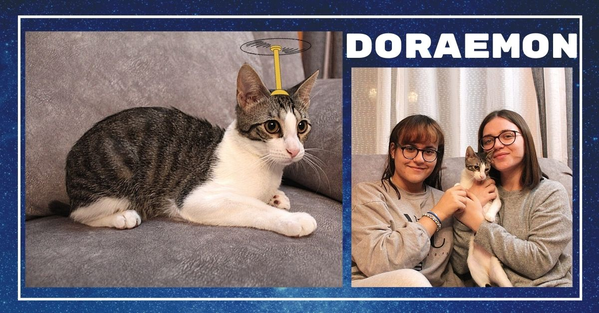doraemon gato adoptado zarpa