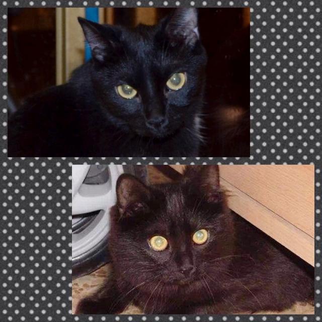 ¡Tina y Lola adoptadas!