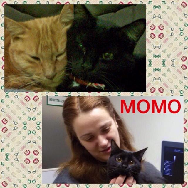 ¡Momo adoptada!