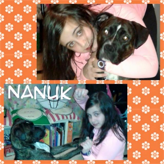 ¡Nanuk adoptada!